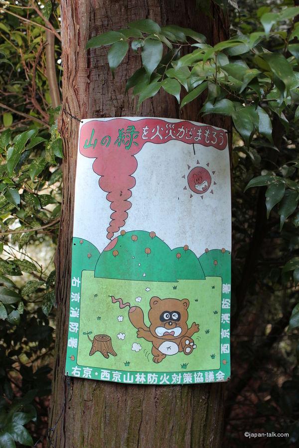 Енот - один из основных персонажей агитации против лесных пожаров